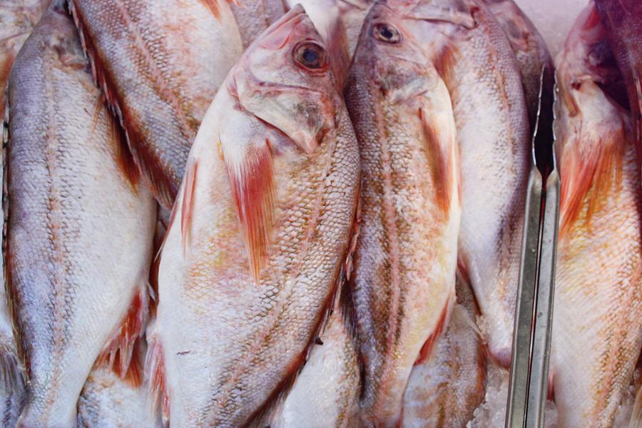 PKG-photo-fish